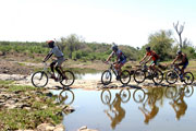 Guided bike safaris